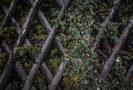 drewniany płot z roślinnością