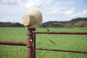 zardzewiałe ogrodzenie